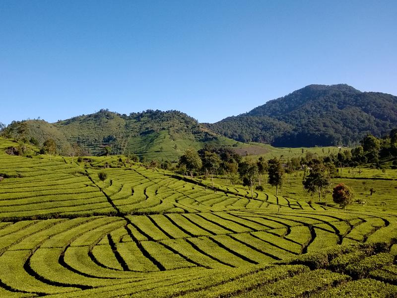 Ciwidey dan Alam Bandung Selatan 7