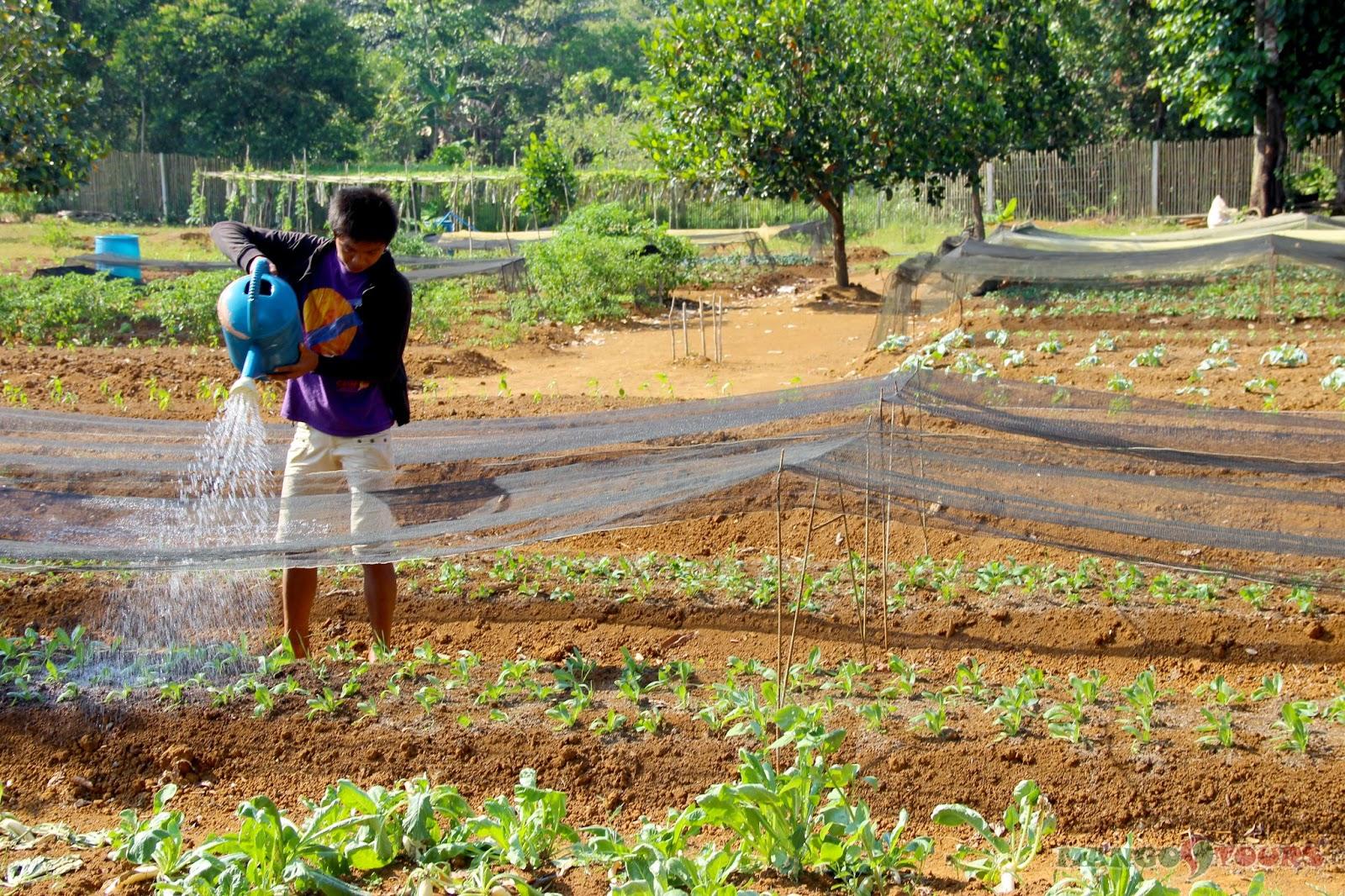 Mango Tours Philippines Puerto Princesa Palawan Sheridan Organic Farm
