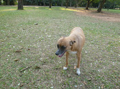 Nelly no Ibirapuera