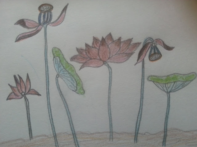 lotus in color