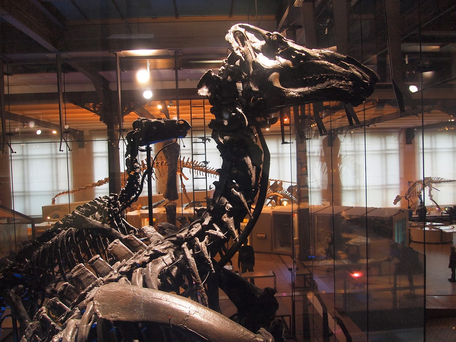 dinosaurus  5 Museum Dinosaurus Termegah Di Dunia P2082211