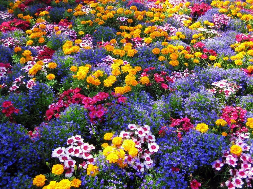 flores jardim do mar: um mar de rosas um jardim de flores como se o jardim do édem foi e é