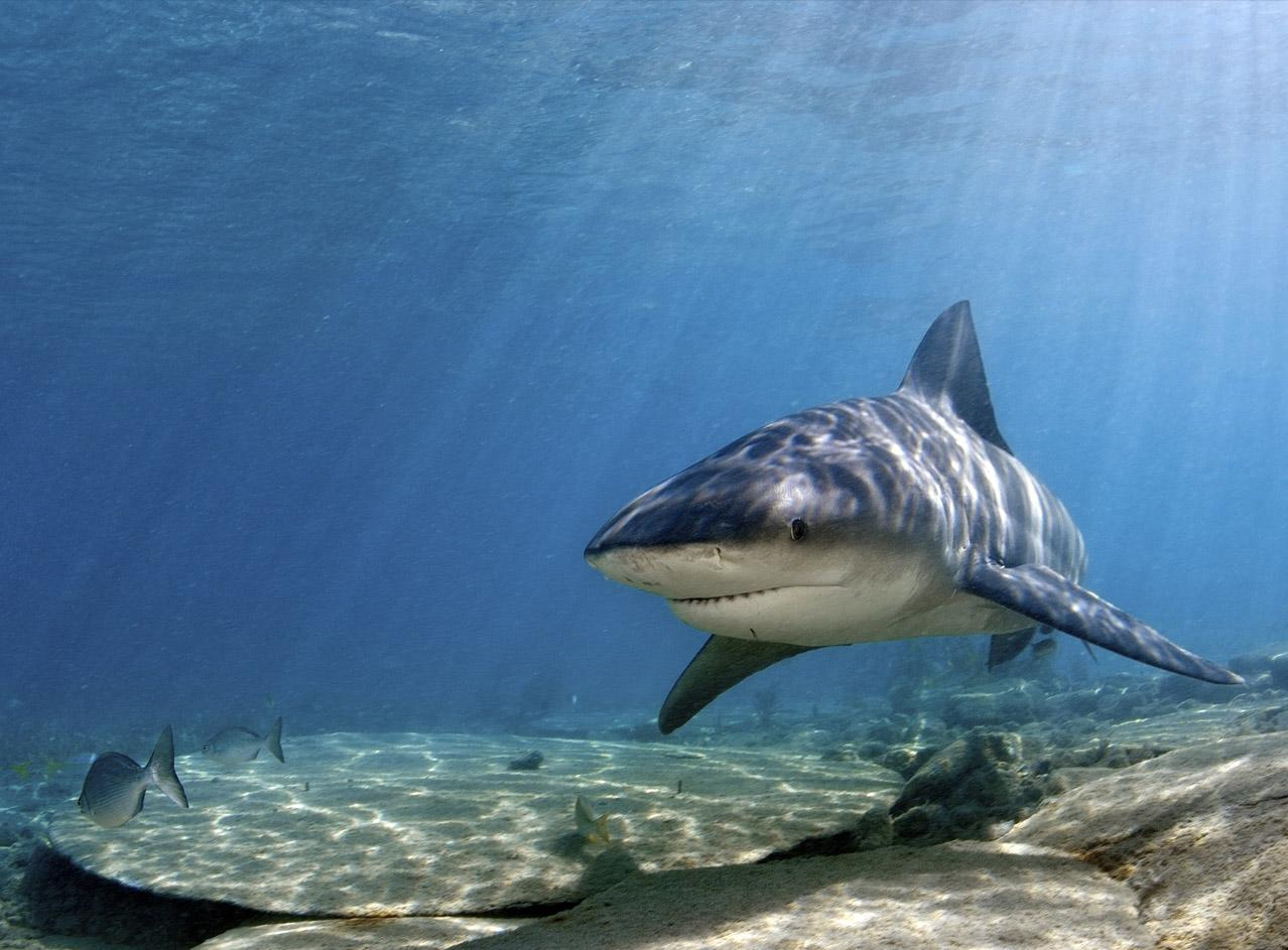 Shark the biggest animals kingdom for What fish has eyelids