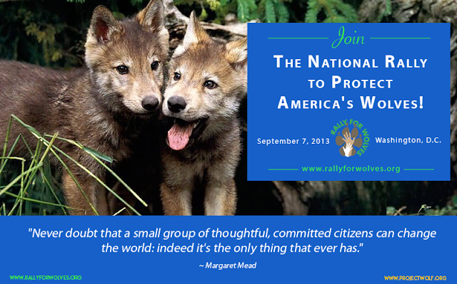 You are invited: The National Rally to Protect America's Wolves! (Video)