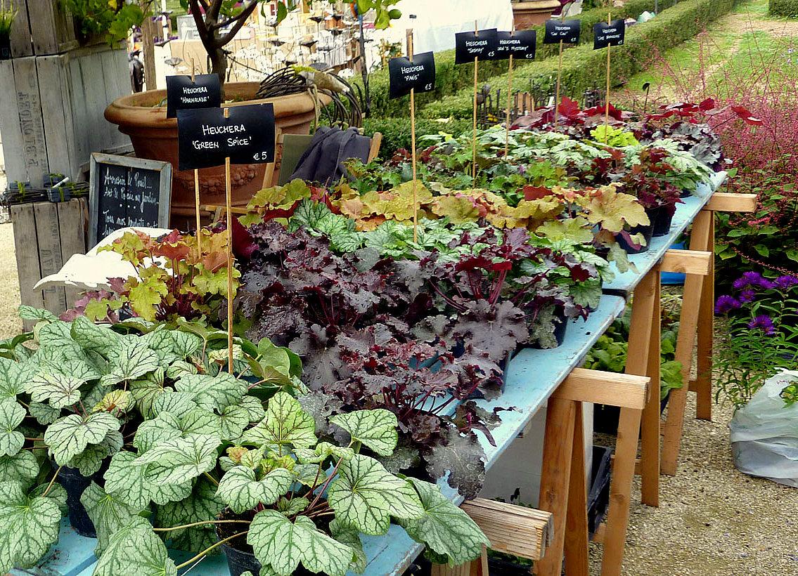 Il mondo in un giardino: Alla scoperta delle heuchere