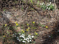 Äntligen - Våren är här!