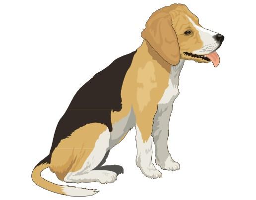 el perro como mamifero: