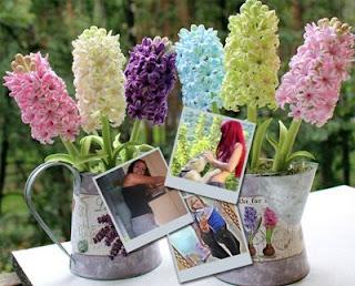 montagem do flores de jacinto