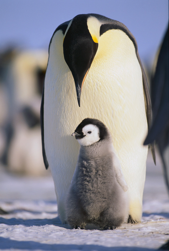 O G Penguin The Marriage Coach: Wh...