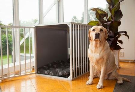 goedkope honden bench 2