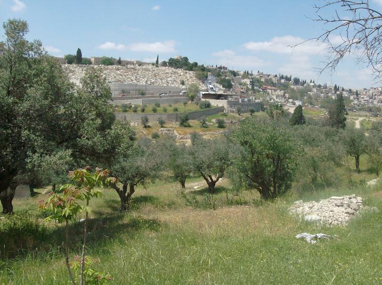 Mt of Olives