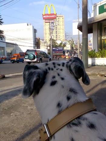 mcdonalds, dog, dalmatian