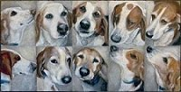 purchase art to help the hounds - prints available $75
