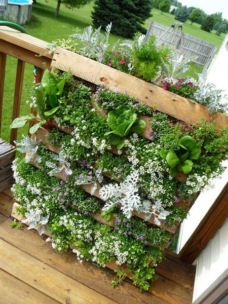 mini jardim reciclado:Blog de Decorar: Finalmente o Pallet volta ao Quintal