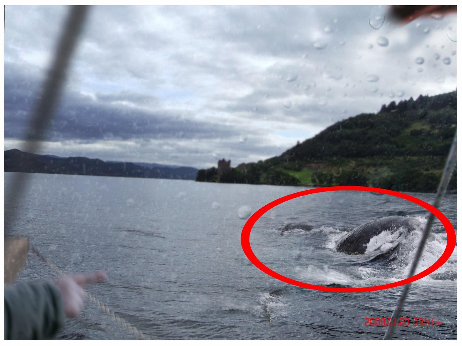 Loch Ness Monster Sightings 2014 Loch ness monster sightings