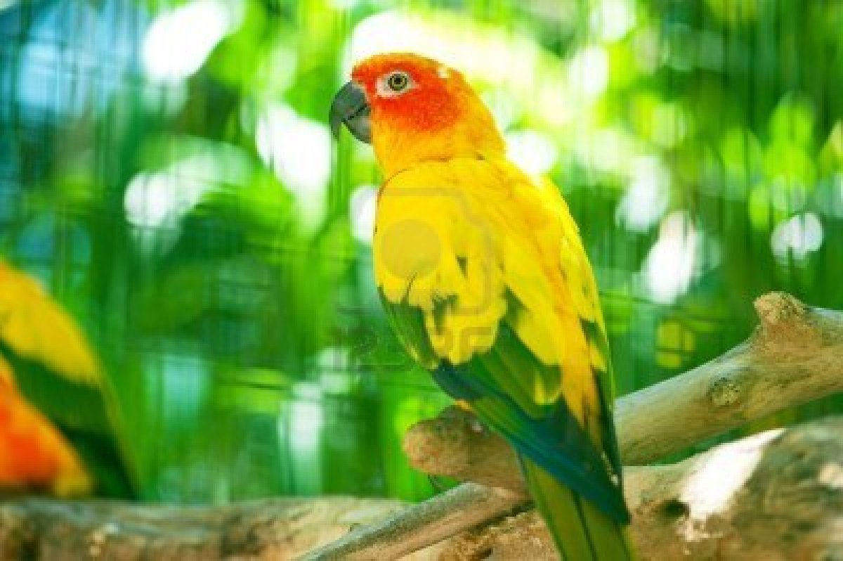 Beautiful parrotcolorful parrotparrot kissing girl full hd galleryparrot speaking popat indian asian macau worlds cute kissing girl hd images new latest unseen flying in sky land see bank of river parrot hd hq voltagebd Images