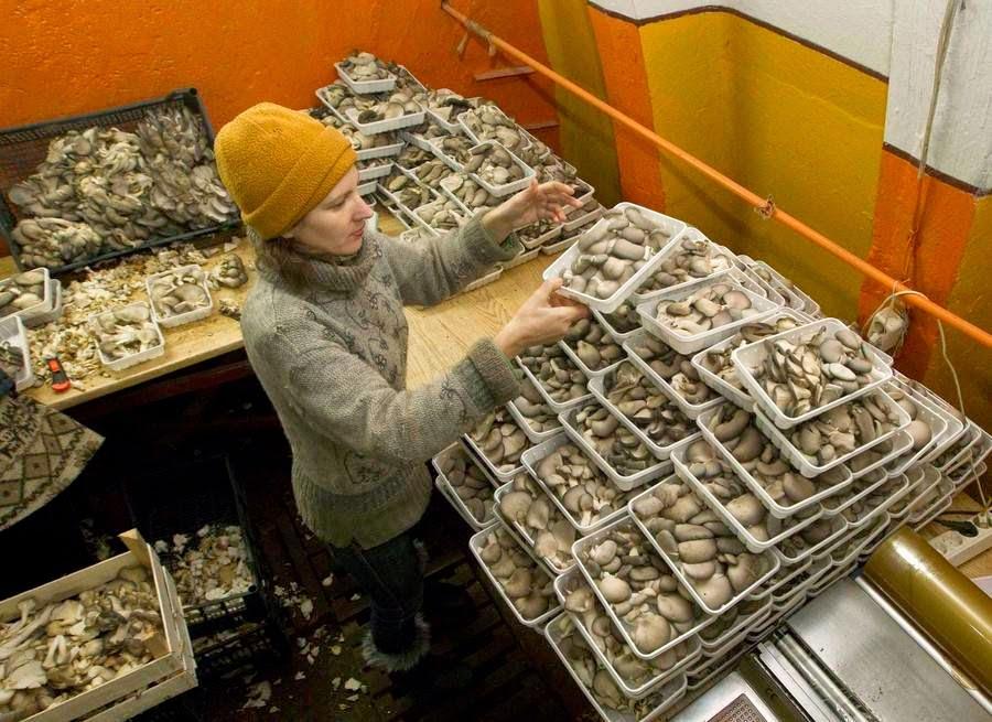 Missile Hangars for growing Mushrooms in Belarus