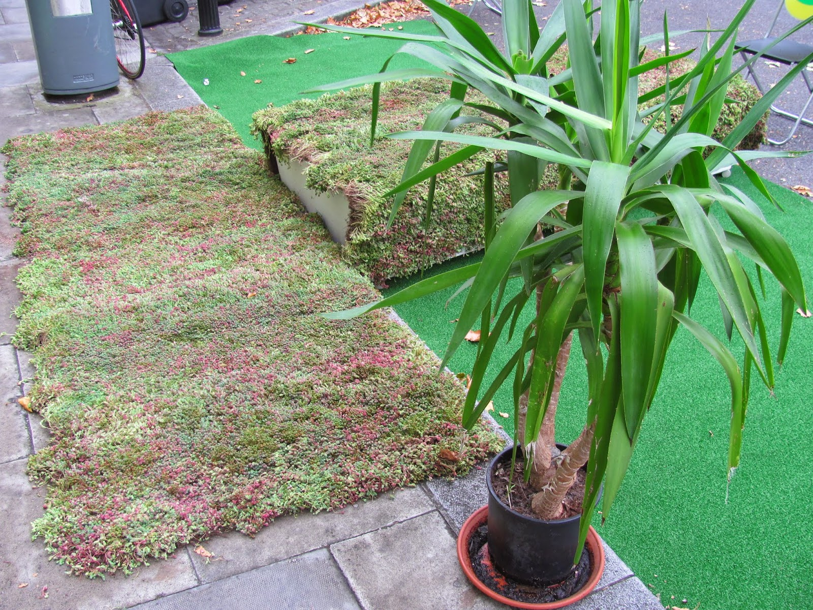 Sedum and a Potted Palm at Park(ing) Day Dublin 2014