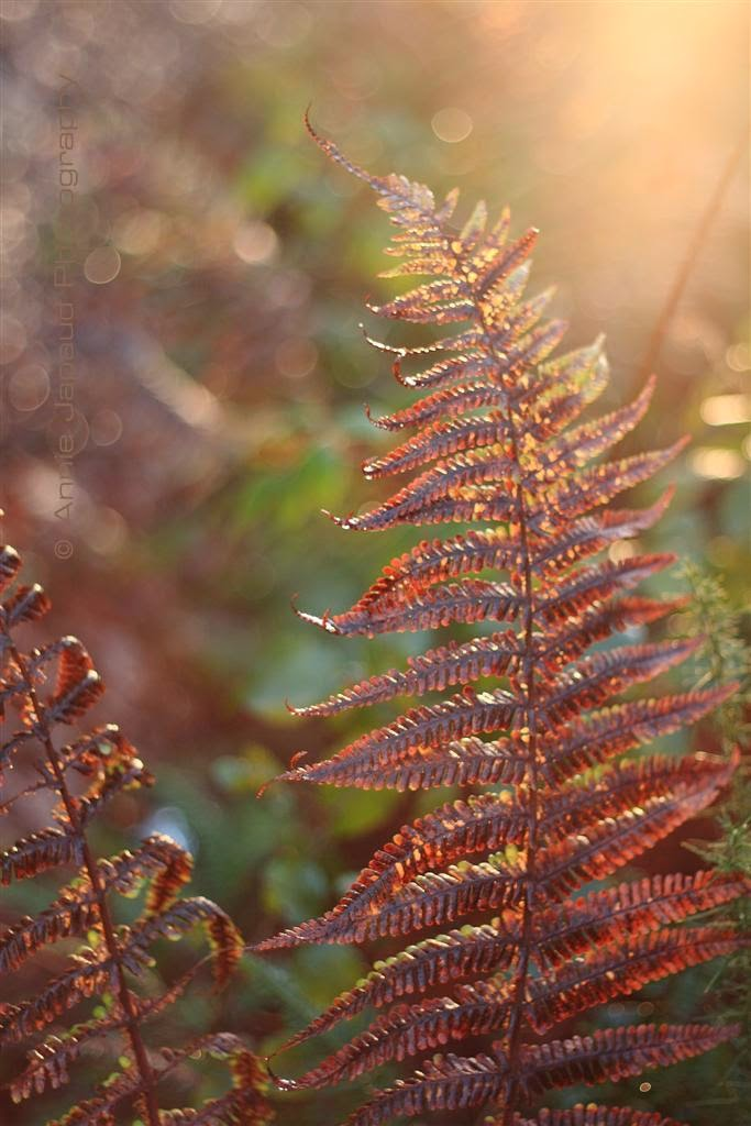 ferns light