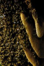 Bee hive photo