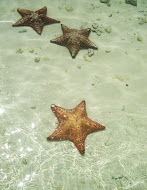 Starfish On Spanish Cay