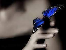 El efecto mariposa.