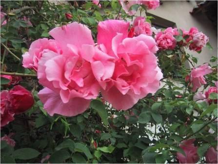 club liseron les rosiers de liliane r union du 9 avril 2012. Black Bedroom Furniture Sets. Home Design Ideas