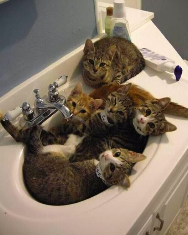 Funny cats - part 92 (40 pics + 10 gifs), cats orgy in the sink
