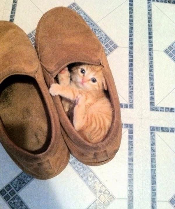 Funny cats - part 110 (40 pics + 10 gifs), cat photos, cat pic