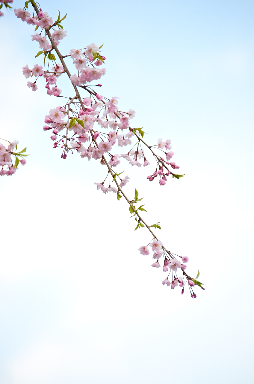 Shinjuku Mad - Days of carefreeness are merely a cherry blossom long 01