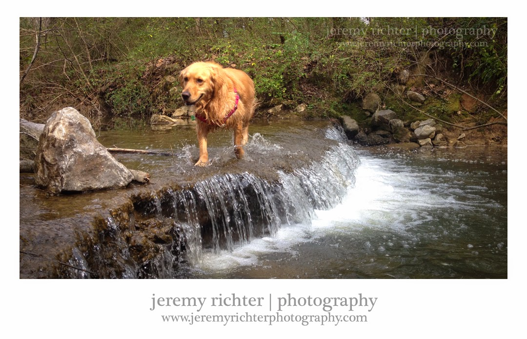 Golden Retriever at Black Creek Park in Fultondale