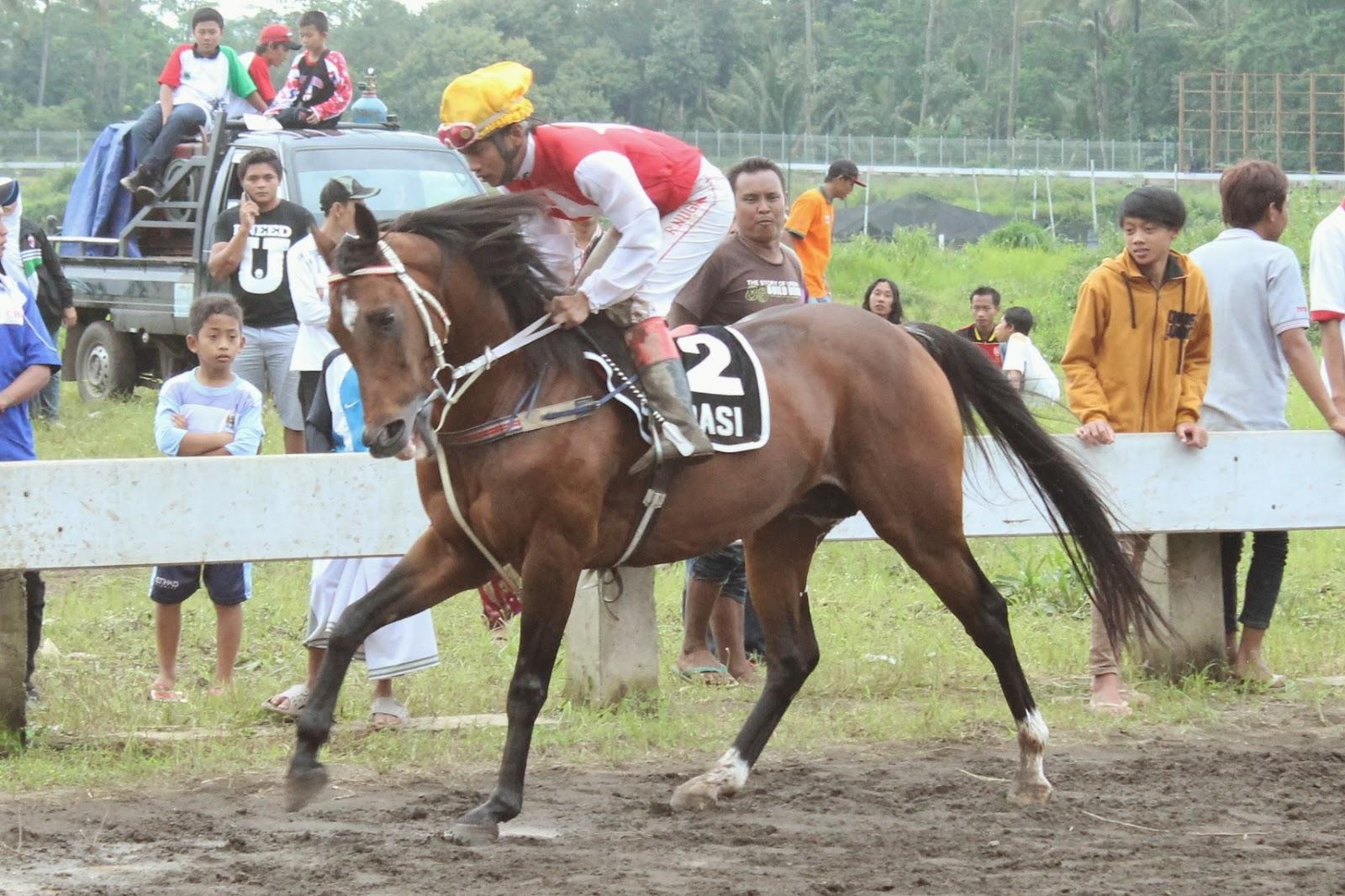 Hasil gambar untuk foto kuda Tuan Nagari