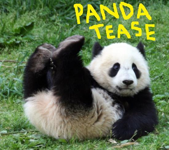 Sperm harvesting panda galleries 1