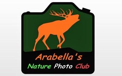 Arabella's member