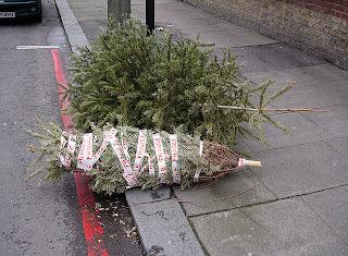 sad dead christmas trees alone