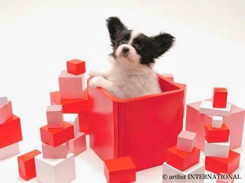 Cute Dogs 12