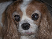 Bucky 1998 - 2010