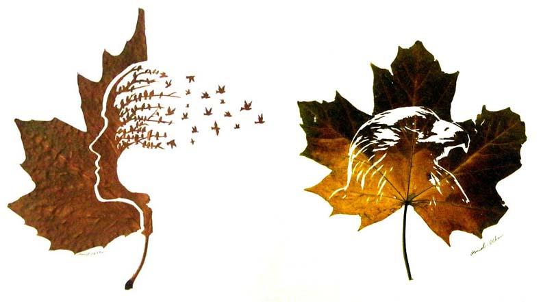 Delicadas hojas cortadas por Omid Asadi