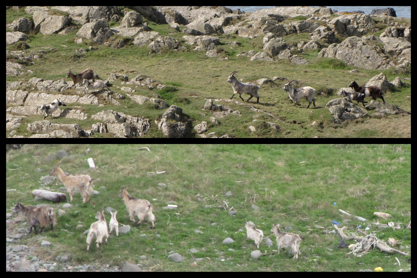Deer Path Farms Rock Island Tn Directions