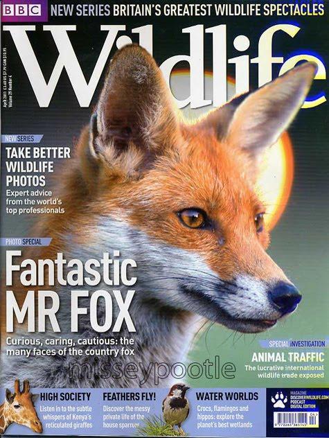 BBC Wildlife Fox Cover