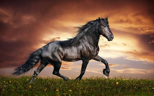 Beautiful Black Horse And Sunset