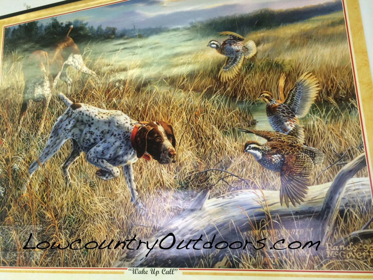 pointer flushing a few bobwhite quail the decline in quail numbers ...