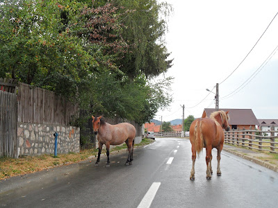 Konie Rumunia