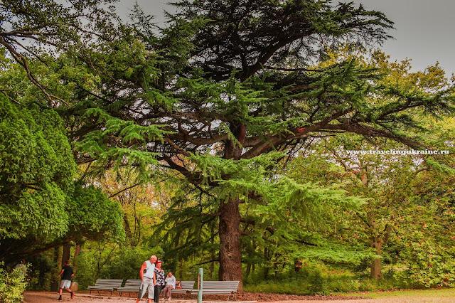 Алупкинский парк