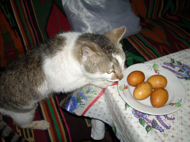 Musek the Cat and Onion Shells Painted Easter Eggs