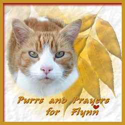 PURRS FOR FLYNN