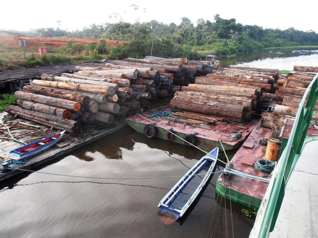 do Ibama apreende balsas e desmonta esquema de extração de madeira  #846247 1024x768