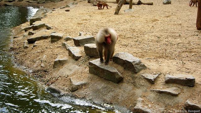 Wallpaper met een aap bij het water