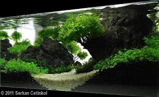 đá nham thạch được dùng phổ biến trong hồ thủy sinh