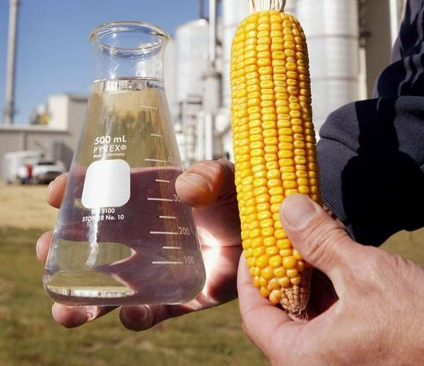 Biofuels from corn turned more harmful than petrol